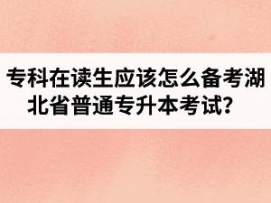 专科在读生应该怎么备考湖北省普通专升本考试?